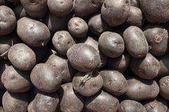 Oogst van purpere aardappelsachtergrond royalty-vrije stock fotografie
