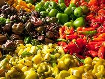 Oogst van Spaanse pepers Stock Afbeelding