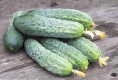 Oogst van verse komkommers Stock Fotografie