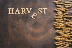 Oogst-woord van houten brieven Gouden oren van tarwegrens op een donkere achtergrond Hoogste mening, exemplaarruimte royalty-vrije stock afbeelding