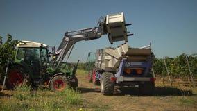 Oogstend in de wijngaard, een tractorvrachtwagen om druiven leeg te maken stock footage