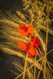 Oogstende de Wintertarwe en Rode Roddelpapaver Stock Fotografie