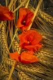 Oogstende de Wintertarwe en Rode Roddelpapaver Royalty-vrije Stock Afbeeldingen