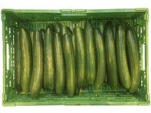 Oogstende komkommers Royalty-vrije Stock Afbeeldingen
