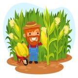 Oogstende Landbouwer In Cornfield Stock Foto's