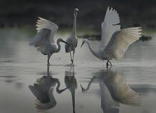 Ooievaar drie bij het water en de zijn gedachtengang royalty-vrije stock afbeeldingen