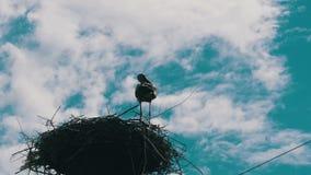 Ooievaar in een nest op een machtslijnen van de pijlerhoogspanning op hemelachtergrond stock video