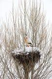 Ooievaar en sneeuw Stock Afbeelding