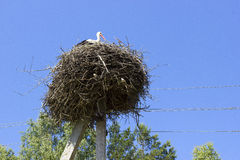 Ooievaar in het nest royalty-vrije stock foto's