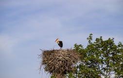 Ooievaar in het nest op de elektrische pool royalty-vrije stock afbeeldingen