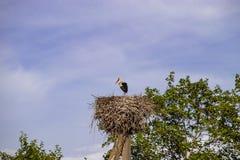 Ooievaar in het nest op de elektrische pool stock afbeeldingen