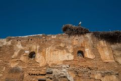 Ooievaar in het nest tegen de blauwe hemel op de oude muur van de ruïnes stock foto's