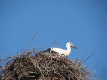 Ooievaar in het nest tegen de blauwe hemel in Wit-Rusland stock afbeelding