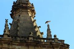 Ooievaar in kerk van de zestiende eeuw in Briñas spanje stock foto's