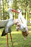 Ooievaar met de baby stock fotografie