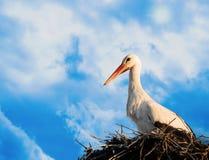 Ooievaar in nest op een zonnige dag stock afbeelding