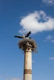 Ooievaar op de ruïnes van de oude stad van Volubilis marokko stock foto's