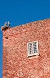 Ooievaar op een dakbovenkant Stock Foto's