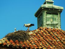 Ooievaar op het dak Stock Afbeelding