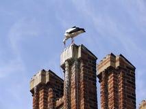 Ooievaar op het historische stadhuis Tangermuende Stock Foto's