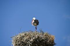 Ooievaar op het nest royalty-vrije stock afbeeldingen