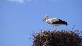 Ooievaar op het nest over een kolom met blauwe hemel bij de stad van Spanje royalty-vrije stock foto