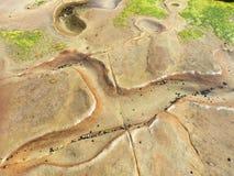 Ooievaar-vormige rockpool Stock Afbeelding