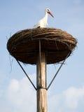 Ooievaar in zijn nest Stock Fotografie
