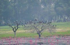 Ooievaars en Aalscholvers op een Boom in het Moerasland royalty-vrije stock afbeelding
