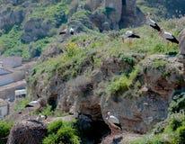 Ooievaars in hun natuurlijke habitat stock afbeelding