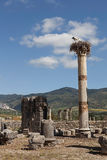Ooievaars op de ruïnes Volyubilisa.Marokko. royalty-vrije stock afbeeldingen