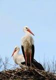 Ooievaars op hun nest stock foto's