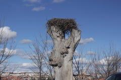 Ooievaars` s nest in wal van Avila stock foto