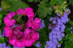 Ooievaarsbek over purpere groepsbloemen - van op hoogte royalty-vrije stock fotografie