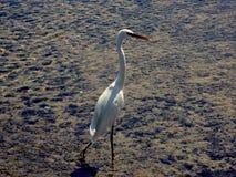 Ooievaarsvogel in het water royalty-vrije stock foto