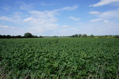 Ooijpolder near Nijmegen in the Netherlands. Farmland in the Ooijpolder near the village of Ooij and city of Nijmegen in the Netherlands Royalty Free Stock Photo