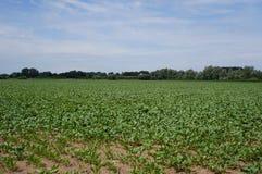 Ooijpolder near Nijmegen in the Netherlands. Farmland in the Ooijpolder near the village of Ooij and city of Nijmegen in the Netherlands stock images