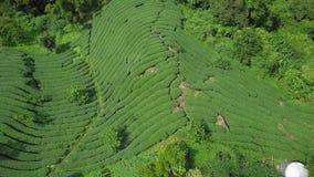 Oolong-Tee-Plantage in Alishan-Bereich, Taiwan Schattenbild des kauernden Gesch?ftsmannes stock video