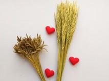 Oor van rijst en teken die hart geborduurde rode brievenliefde tonen Stock Foto's
