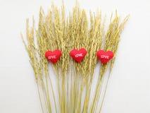 Oor van rijst en teken die hart geborduurde rode brievenliefde tonen Royalty-vrije Stock Foto