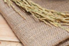 Oor van rijst op zak Royalty-vrije Stock Foto's