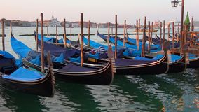Oored gondolas in the Bay of San Marco. Morning Venice stock video