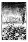 Oorlog en rozen Royalty-vrije Stock Foto's
