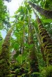 Oorspronkelijk tropisch regenwoud royalty-vrije stock afbeeldingen