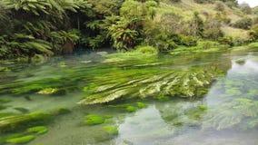 Oorspronkelijke, duidelijke en verfrissende rivierstroom in Waikato, Nieuw Zeeland stock video