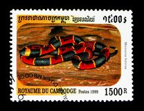 Oostelijke Coral Snake Micrurus-fulvius, Slangen van Kambodja serie, circa 1999 royalty-vrije stock fotografie