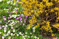 oostelijke de lentebloemen Stock Afbeeldingen