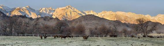 Oostelijke Siërra Dawn Panorama Stock Afbeeldingen