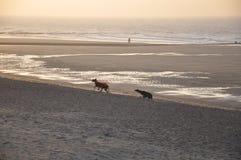 Oostende beach Stock Photo