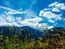 Oostenrijk - Alpiene Weide in Spriing stock fotografie